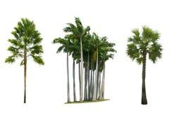 Uppsättning av palmträdet som isoleras på vit bakgrund Royaltyfri Foto