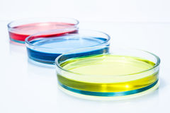 Uppsättning av Petri disk med färgflytande Arkivfoto