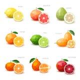 Uppsättning av polygonal citrusfrukt - citron, grapefrukt, pomelo, orangutang Arkivfoto