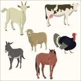 Uppsättning av populär färgrik animalector Arkivbild