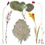 Uppsättning av pressande lösa blommor Arkivbilder