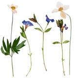 Uppsättning av pressande lösa blommor Arkivbild