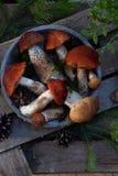 Uppsättning av röd locksopp i bunke på träbakgrund Bruna lösa champinjoner Ätlig svamp Leccinum Aurantiacum som samlas i skog royaltyfria bilder