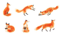 Uppsättning av röda fluffiga rävar för vattenfärg i rörelse på vit Sittande räv och att sova räven och att spela räven och att ho royaltyfri fotografi