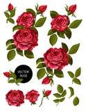 Uppsättning av röda rosor och beståndsdelar för din design också vektor för coreldrawillustration vektor illustrationer