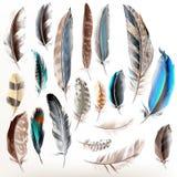 Uppsättning av realistiska färgrika fjädrar för vektor Royaltyfri Bild