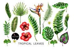 Uppsättning av realistiska tropiska blommor och sidor för din design royaltyfri illustrationer