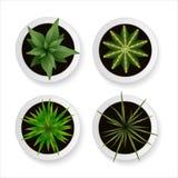 Uppsättning av realistiska växter och kakturs för vektor i vita blomkrukor för Royaltyfria Bilder