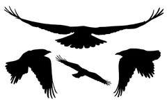 Uppsättning av realistiska vektorkonturer av flygfåglar Arkivfoto