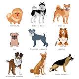 Uppsättning av rolig hundkapplöpning av olika avel Rashundsamling stock illustrationer
