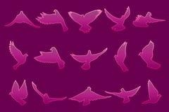 Uppsättning av rosa duvor för flyg på mörk rosa bakgrund Fotografering för Bildbyråer