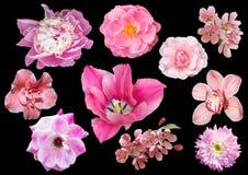 Uppsättning av rosa färgblommor som isoleras på svart bakgrund Royaltyfri Fotografi