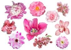 Uppsättning av rosa färgblommor som isoleras på vit bakgrund Arkivfoton