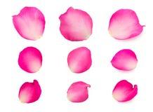Uppsättning av rosa färgroskronblad arkivbild