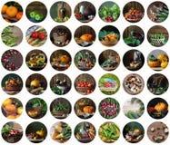 Uppsättning av runda symboler med grönsaker Royaltyfria Bilder