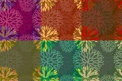 Uppsättning av 6 sömlösa blom- bakgrunder Arkivbilder