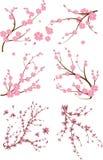 Uppsättning av sex japanska filial Arkivfoton