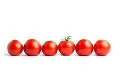 Uppsättning av sex körsbärsröda tomater Arkivbild