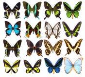 Uppsättning av sexton olika vibrerande tropiska fjärilar Royaltyfri Fotografi