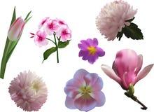 Uppsättning av sju rosa blommor som isoleras på vit Arkivfoton