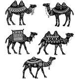 Uppsättning av stiliserade diagram av dekorativa kamel Royaltyfria Bilder