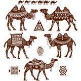 Uppsättning av stiliserade diagram av kamel Fotografering för Bildbyråer