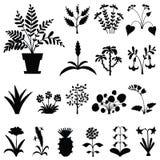 Uppsättning av stiliserade houseplantss konturer Arkivfoton