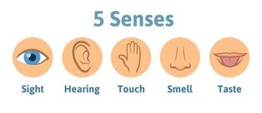 Uppsättning av symbolen för fem den mänskliga avkänningar: vision utfrågning, lukt, utfrågning, handlag, smak Syna, gå i ax, räck Royaltyfri Fotografi