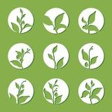 Uppsättning av tebuskefilialer Vektorkontur i cirkeln som isoleras på grön bakgrund stock illustrationer