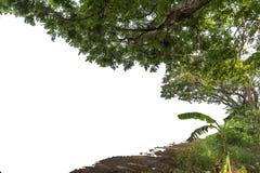 Uppsättning av träd isolerad vit bakgrund Arkivfoton