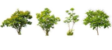 Uppsättning av träd isolerad vit bakgrund Arkivbilder