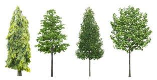Uppsättning av träd som isoleras på vit bakgrund arkivfoto