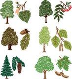 Uppsättning av träden Royaltyfri Bild