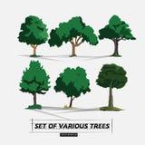 Uppsättning av trädet - Royaltyfri Foto