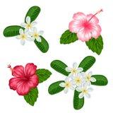Uppsättning av tropisk blommahibiskus och plumeria Objekt för garnering semestrar inbjudningar, hälsningkort, affischer Arkivbilder