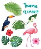 Uppsättning av tropiska beståndsdelar Royaltyfri Bild
