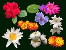 UPPSÄTTNING av tropiska blommor på svart bakgrund Royaltyfria Bilder