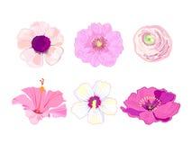 Uppsättning av tropiska exotiska växter Rosa blommor vektor stock illustrationer