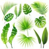 Uppsättning av tropiska sidor för vektor Realistiska växter vektor illustrationer