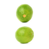 Uppsättning av två enkla limefrukter i olika sammansättningar och perspektiviska förkortningar som isoleras över den vita bakgrun Arkivbilder