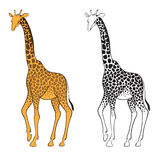 Uppsättning av två giraff. Väggklistermärkear Royaltyfri Bild