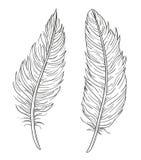 Uppsättning av två hand drog dekorativa fjädrar som isoleras på whi Arkivbilder
