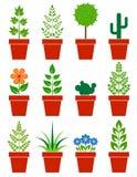 Uppsättning av växter i krukor Royaltyfria Bilder