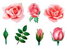 Uppsättning av vattenfärgbeståndsdelar, knoppar och sidor av rosa, korallrosor, hand-dragen illustration som isoleras på vit  royaltyfri illustrationer