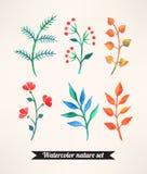 Uppsättning av vattenfärgväxter Royaltyfria Bilder