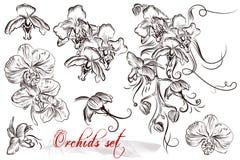 Uppsättning av vektor specificerade orkidéblommor royaltyfri illustrationer