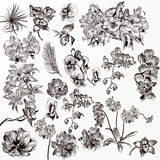 Uppsättning av vektor specificerade orkidéblommor vektor illustrationer