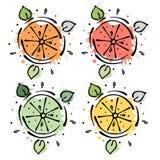 Uppsättning av vektorillustrationer av frukter Limefrukt, citron, grapefrukt, apelsin, hand drog konturlinjer och slaglängder med stock illustrationer