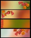 Uppsättning för baner för höstsidor i älskvärd tappningfärg Royaltyfri Foto