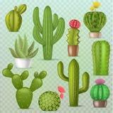 Uppsättning för botanisk för kakturs för kaktusvektor blom- realistisk grön cactaceous suckulent för växt illustration för botani royaltyfri illustrationer